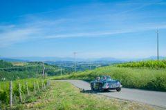TR-4 in vineyards