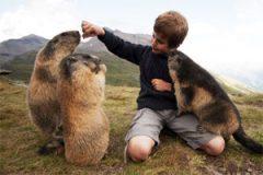 groudhogs